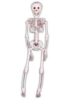 Skeleton hanging 42cm